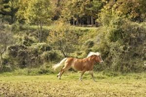 cavalls i natura a cal ponç de belians a vallcebre turisme rural