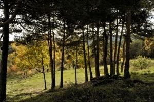natura a cal ponç de belians a vallcebre turisme rural