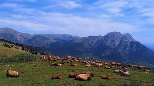 belians-paisatge-casa-rural-vallcebre-berguedà-pisicina-sostenible-valls-del-pedraforca